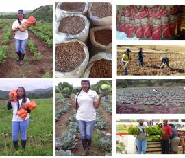 agriculture Mbali Bengu